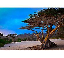 Sunset Cypress Photographic Print