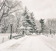 Central Park Winter Trees by Vivienne Gucwa