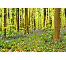 wild hyacinths in the forest Photographic Print