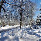 Urban Toronto in Winter by Larry Llewellyn