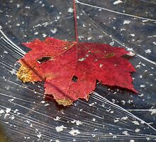 Leaf on Water (ice) 24 by ChuckBuckner