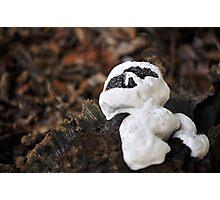 Casper the fungus...for Manon!!! Photographic Print