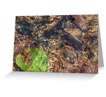 Leaf on Water 30 Greeting Card