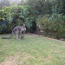 Another Roo View by Kay Cunningham
