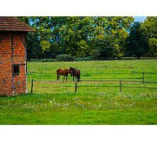 Horse barn, Burgundy Photographic Print