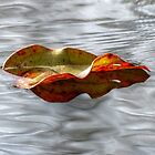 Leaf on water 47 by ChuckBuckner