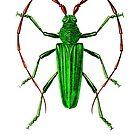 Longhorn Beetle by Kawka