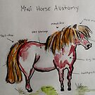 Anatomy of a mini horse by Bianca Neill