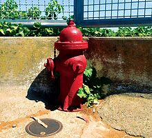 Collection: American Firehydrants: 3 by Awardconcepts