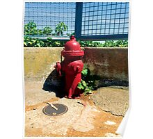Collection: American Firehydrants: 3 Poster