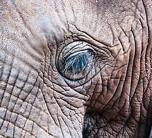 The Elephant Sanctuary 02 by Richard Davis
