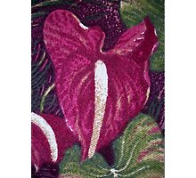 Red Orchid Print Photographic Print
