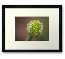 Family of the onion Framed Print