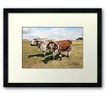 english longhorn cattle Framed Print