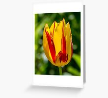 Sun-drenched Tulip Greeting Card