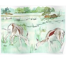 Sketching in the Game Reserve - Springbuck Poster
