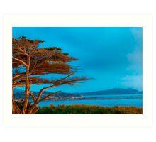 Carmel Cypress Art Print