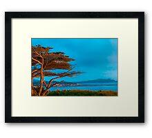 Carmel Cypress Framed Print
