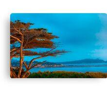 Carmel Cypress Canvas Print