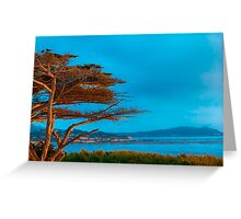 Carmel Cypress Greeting Card