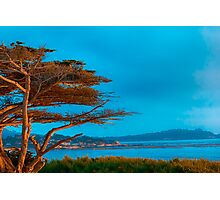 Carmel Cypress Photographic Print