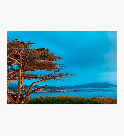 Carmel Cypress Photographic Print