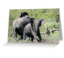 O NO, THIS IS MY SPACE! THE AFRICAN ELEPHANT – Loxodonta Africana - AFRIKA OLIFANT Greeting Card