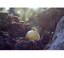 Sunrise Egg Hunt Photographic Print