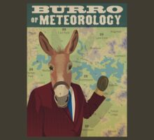 Burro of Meteorology - Sydney by Chris Rees