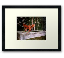 Winged Monkey on Horse Trough Framed Print