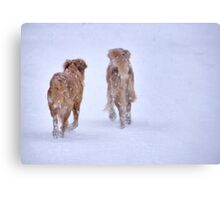 Romancing the snow Canvas Print