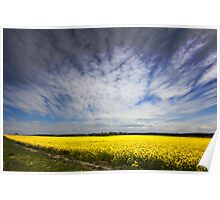 Canola in Spring Poster