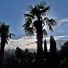 Palms Mountains Clouds  by fiat777
