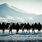 Bactrial Camels by UniSoul