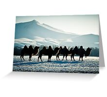 Bactrial Camels Greeting Card