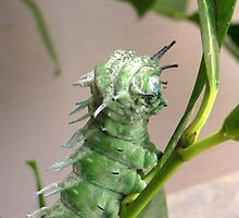 Caterpillar  by ienemien