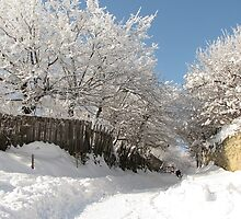 Winter Fairyland in Romania by Dennis Melling