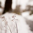 Winter wonderland by SandrineBoutry