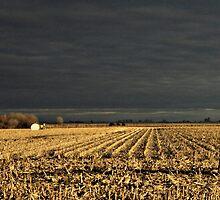 Nebraska Fields by PicsbyJody