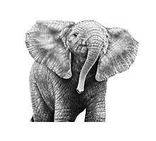 Baby African Elephant Photographic Print