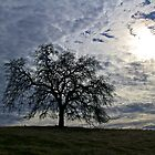 Just Another Tree in the Meadow by John Butler