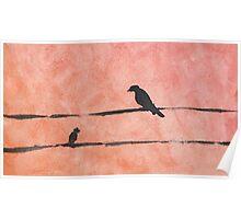Curious Birds Poster