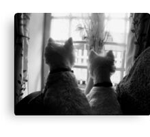 Waiting for mum, WESTIES Canvas Print