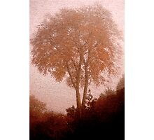 On A Foggy Ambleside Morning .. Photographic Print
