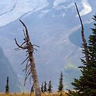 Emmons Glacier behind a dead Subalpine Fir on Mount Rainier by Michael Russell