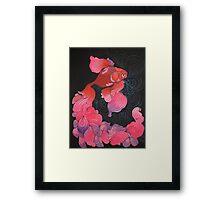 Pink Oranda  Framed Print