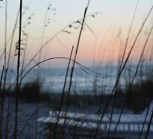 Beach Oats by kaitlyns-photos