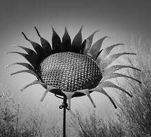 Rusted Sunflower in Tohono Chul by Robert Kelch, M.D.