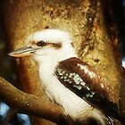 Kookaburra-Kingfisher - Halls'Gap in The Grampians National Park Vic.* by EdsMum