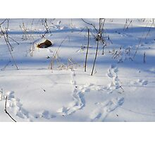 Small Rodent Tracks Photographic Print